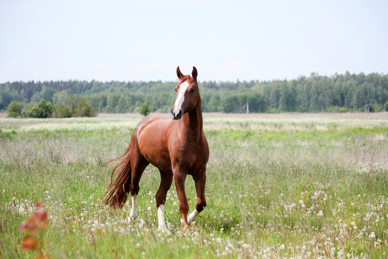 GUIDED TOUR OF THE NORTH TEXAS HORSE COUNTRY
