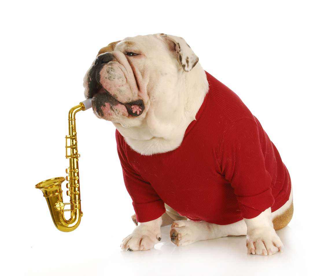 CANINES & COOL JAZZ