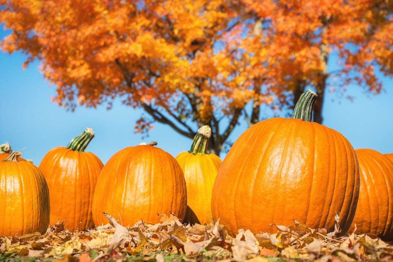 DALLAS ARBORETUM'S NATIONALLY ACCLAIMED PUMPKIN VILLAGE