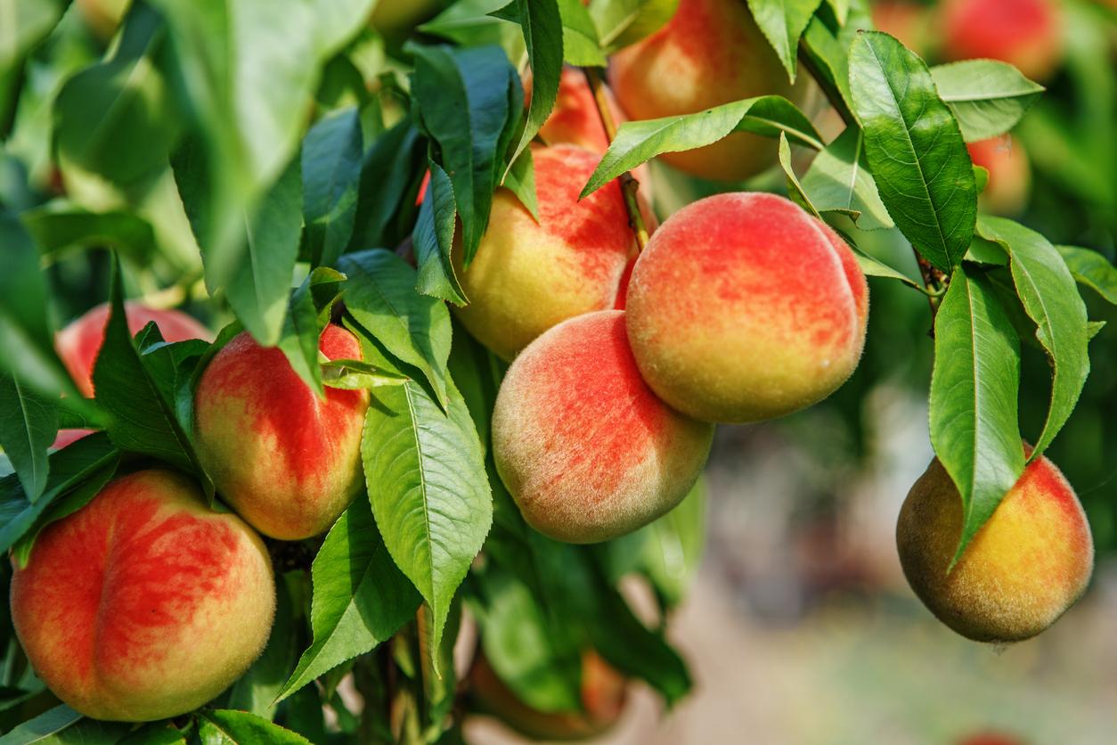 Parker County Peach Festival
