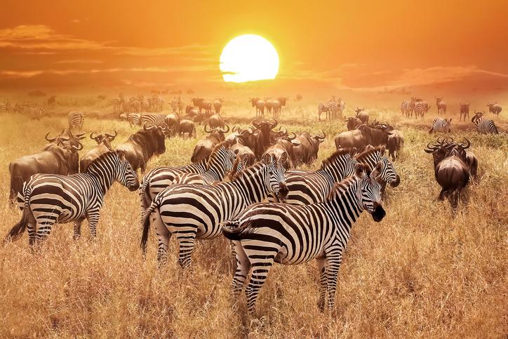 Safari Nights Presented By Reliant