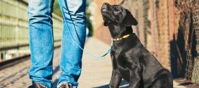 DFW Rescue Me Adopti ...