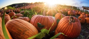 Pumpkin Patches In W ...