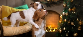"The SPCA of Texas' "" ..."