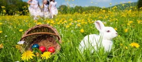 The Bunny Photo Expe ...