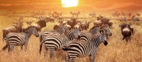 Safari Nights Presen ...