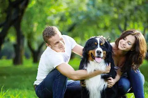 pet friendly houston